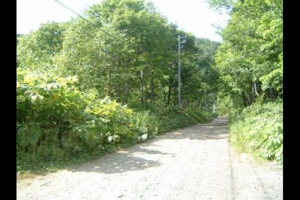 Niseko Village Woodland