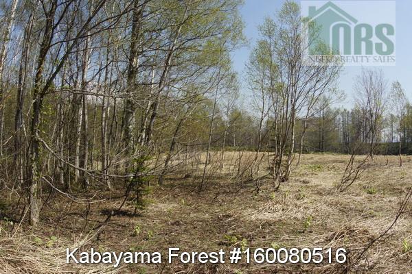 Kabayama Forest